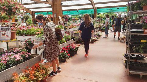 La competencia desleal de Verdecora: ignora el estado de alarma y vende flores y macetas