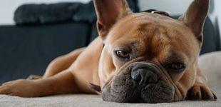 Post de ¿Tu perro tiene insomnio? Así puedes ayudarle a dormir bien