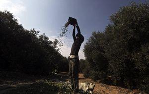 Las exportaciones de aceite de oliva superan ya el millón de toneladas, un 82% más
