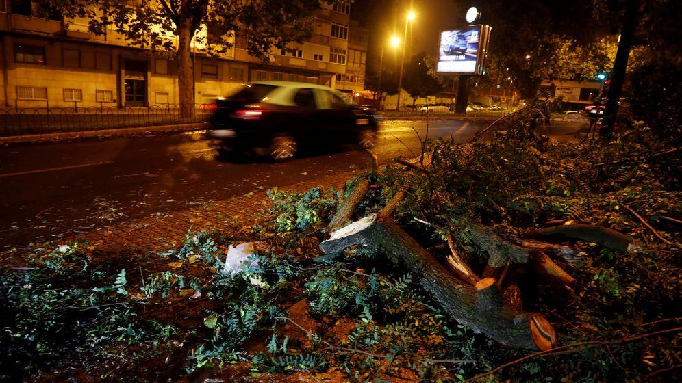 Foto: Árboles caídos tras el paso de Leslie en Portugal. (Reuters)