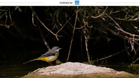 Así son las aves más esbeltas y andarinas de las riberas españolas