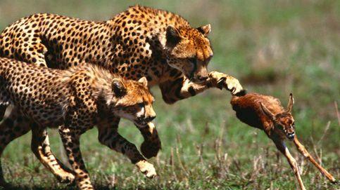 Lucha o muere: el lado más salvaje de la naturaleza