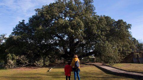 El mejor árbol de Europa en 2021 está en España y tiene más de mil años