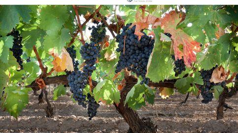 Qué ver en Azofra: visita a la bodega CVNE y cata de vinos