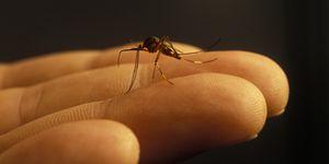 Los cinco remedios caseros más eficaces para repeler a los mosquitos