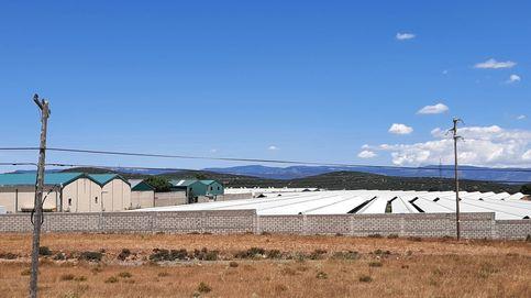Los 'Excalibur' del Covid: Aragón sacrificará con CO2 a 92.700 visones infectados