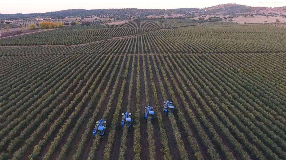 Foto: Una de las explotaciones de Elaia en Portugal. (Elaia)