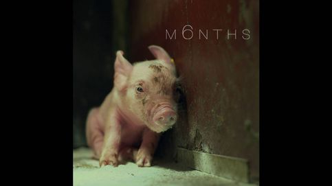 'M6nths': así es la muerte desde el punto de vista de un lechón en un matadero