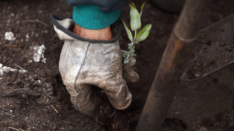 Los sectores que están descarbonizando la economía hacia un Pacto Verde Europeo