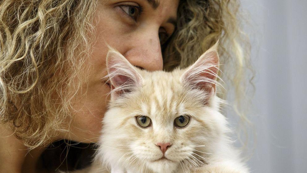 Un estudio revela que tu gato te necesita (aunque creas que no te lo demuestra)
