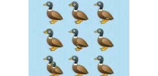 Post de El último acertijo viral: ¿cuántos patos eres capaz de ver en esta imagen?