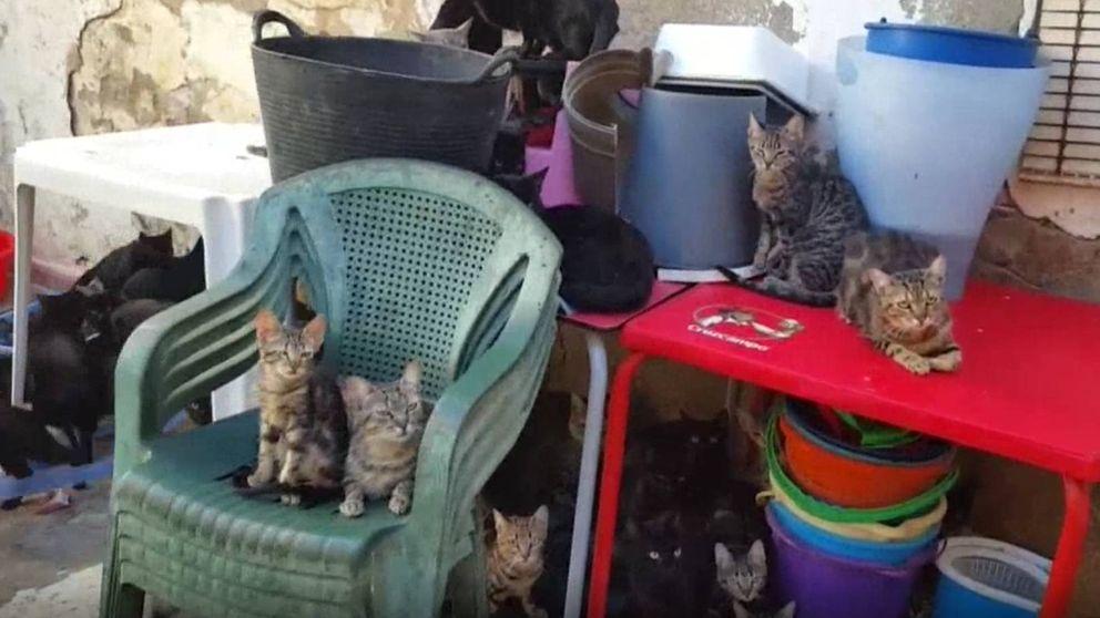 Rescatan a un centenar de gatos en Málaga