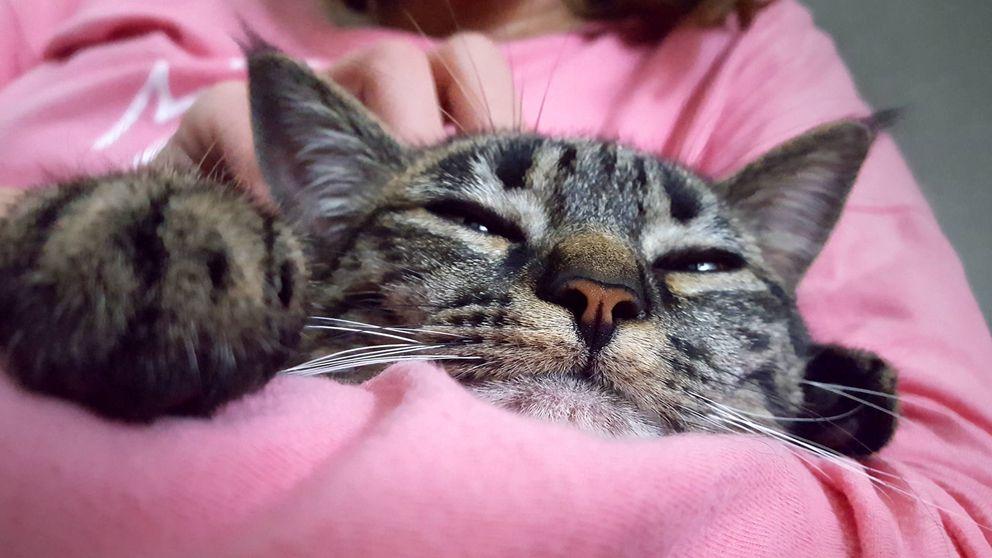 Tratas a tu gato como a un hijo y el mercado lo sabe: el gasto en mascotas se dispara