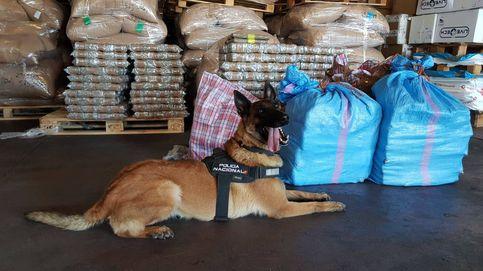 Yuko y Ginger, valor y carácter: así son los perros policía premiados por Interior