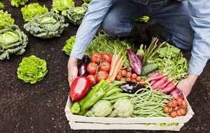Los mejores superalimentos para consumir durante el verano