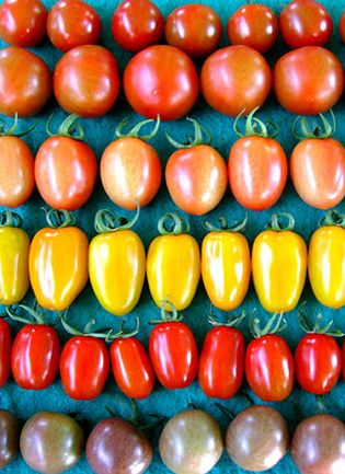 Foto: La crisis es menos crisis con mascarillas de tomate