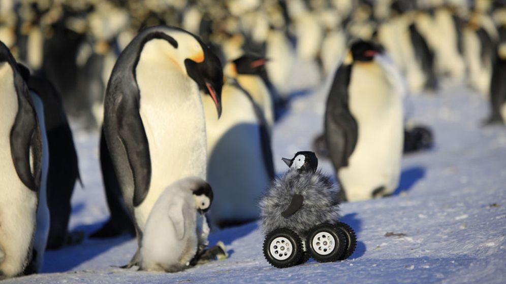 Foto: Los pingüinos emperador, en peligro. Foto:Yvon Le Maho et al./Nature Methods