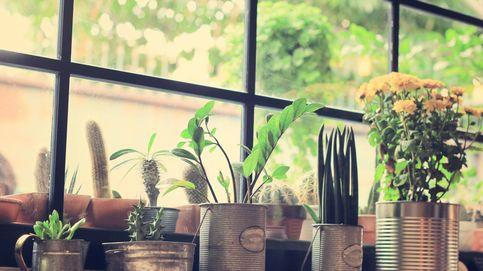 Cómo conseguir por fin que las plantas de tu casa no se te mueran