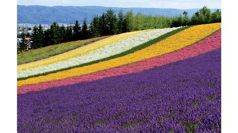 Explorando Hokkaido, la isla de la naturaleza de Japón