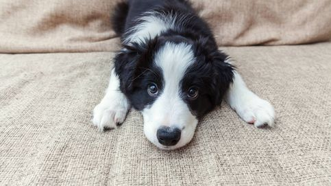 El truco para saber si tu perro es superdotado con un experimento en casa