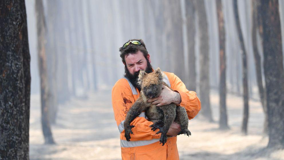 Incendios en Australia: 327 especies en peligro de extinción