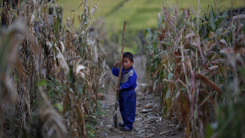 Un niño camina por un campo de maíz dañado por una inundación tras un tifón en la provincia de Hwanghae sur, en septiembre de 2011. (Reuters)