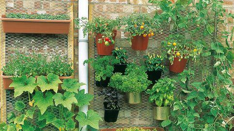 Un huerto en casa: aprende a cultivar pimientos (y más) en una maceta