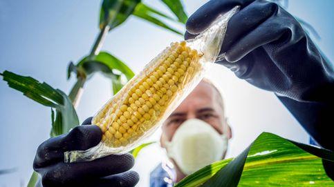 La UE aprueba varios alimentos modificados genéticamente