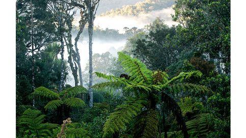 Los ocho bosques más espectaculares del mundo