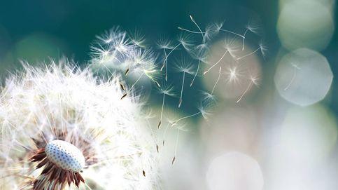 Cinco alimentos para paliar los síntomas de alergia primaveral,  según la ciencia