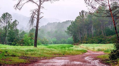 El olor a lluvia esconde un proceso del ciclo vital de las bacterias
