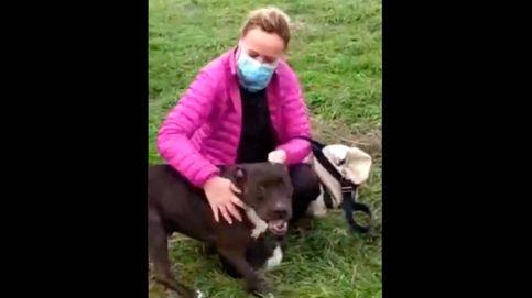 Encuentran a Brutus, el perro que huyó asustado tras la explosión de calle Toledo
