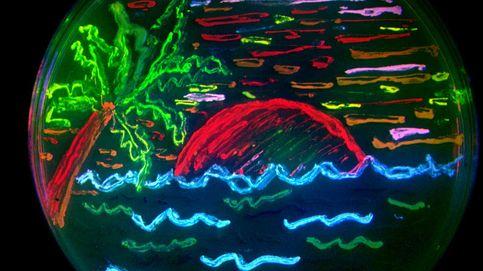 Arte en placas de Petri: doce 'cuadros' pintados con gérmenes y bacterias