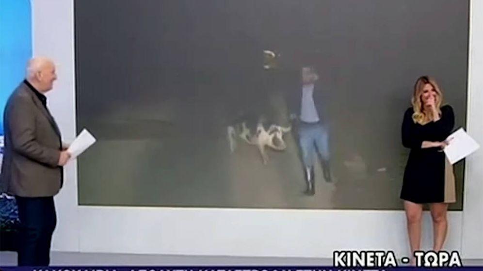 Foto: Los periodistas que estaban en el plató no pudieron contener la risa ante lo que sucedía con su compañero y el cerdo (Foto: YouTube)