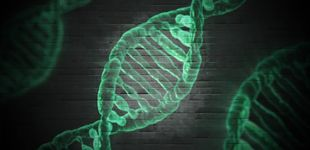 Post de Encuentran un gen que protege frente a la muerte celular en pacientes con ELA y AME
