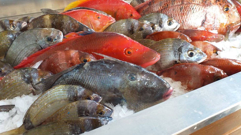 Foto: Pescado del día en El Cotillo