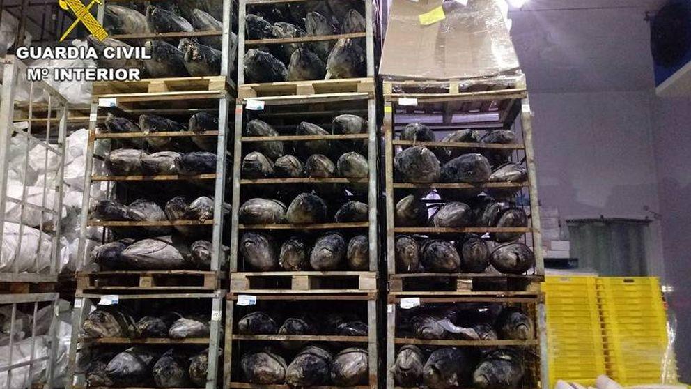 Decomisan 45 toneladas de atún congelado que se iba a vender como fresco