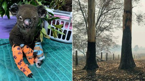 El hospital que cuida a koalas quemados en Australia recauda más de un millón