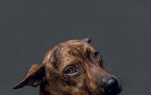 Ocho perros miran a cámara antes de morir