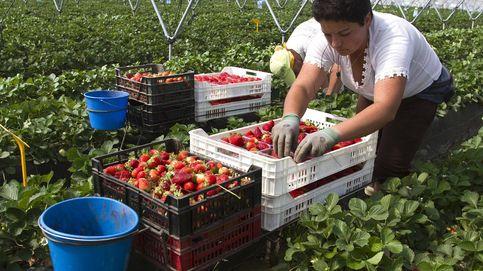 El sabor amargo de la fresa: Huelva no es Alabama, pero faltan inspectores
