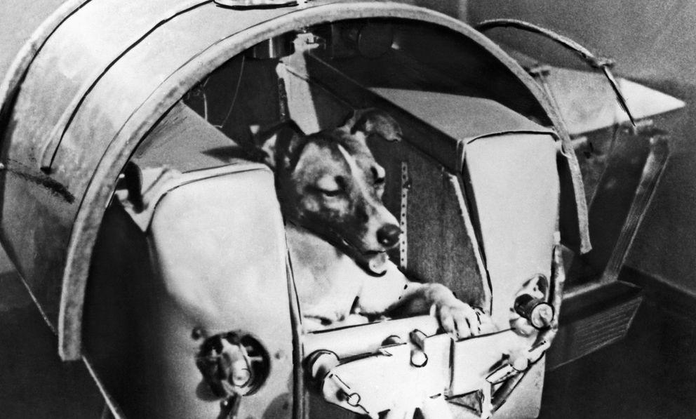 Foto: La historia de Laika, una perra callejera que fue escogida para viajar en el Sputnik 2 a un viaje del que todos sabían que no volvería. (Corbis)