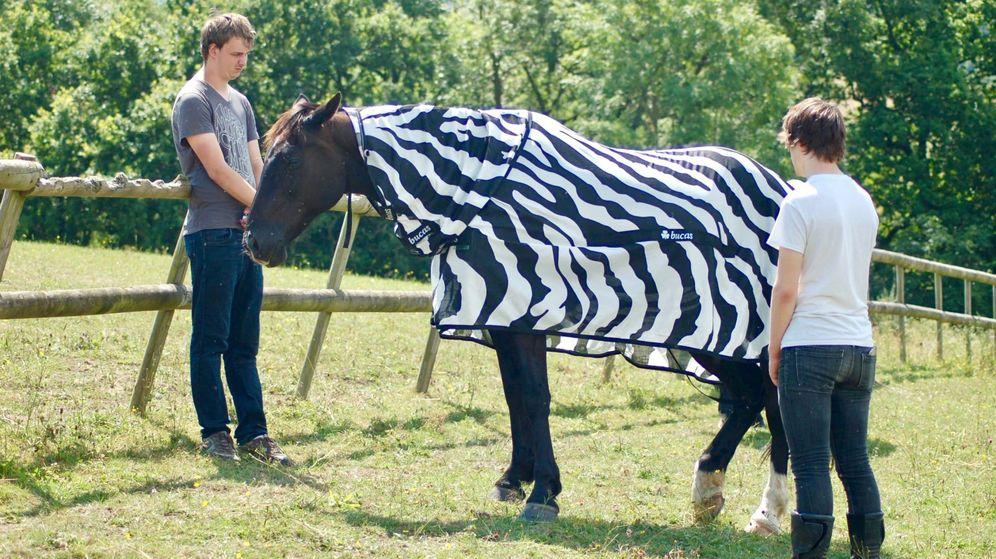 Foto: Los invstigadores disfrazaron a los caballos con abrigos para parecer cebras
