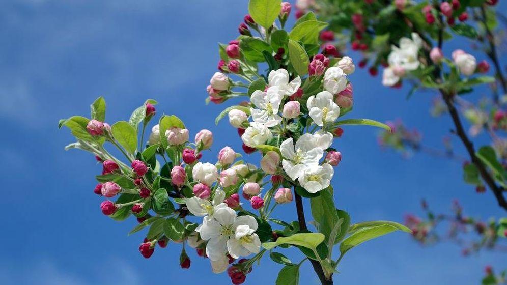 Calendario: El equinoccio de primavera o cuándo empieza la ...