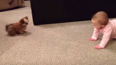 El tierno 'diálogo' entre una bebé y un cachorrito de perro