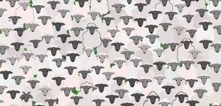 Post de El último acertijo visual: ¿puedes encontrar la cabra entre las ovejas?