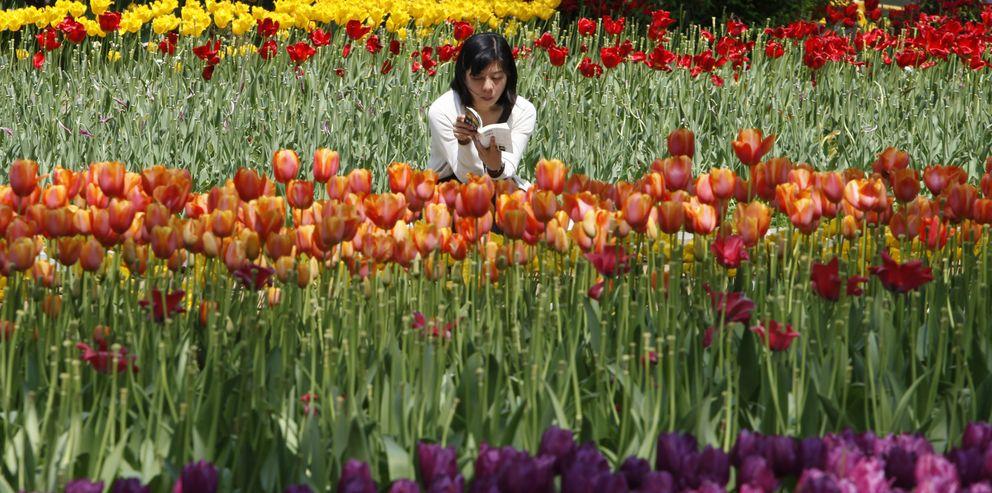 Foto: Una mujer lee un libro en el Parque Yokohama, en la ciudad japonesa ubicada al sur de Tokio (Reuters).