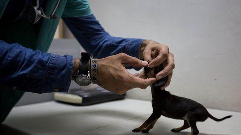 Detenido en Ponferrada por matar a un cachorro de seis semanas a patadas