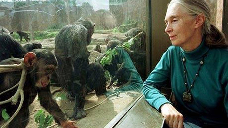 Jane Goodall, galardonada con el Príncipe de Asturias por demostrar la capacidad de raciocinio de los simios. (Reuters)