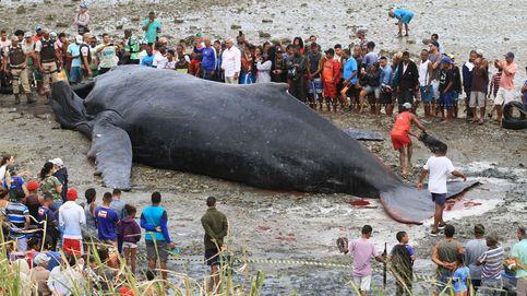 Una ballena muere en Brasil y el año nuevo musulmán: el día en fotos