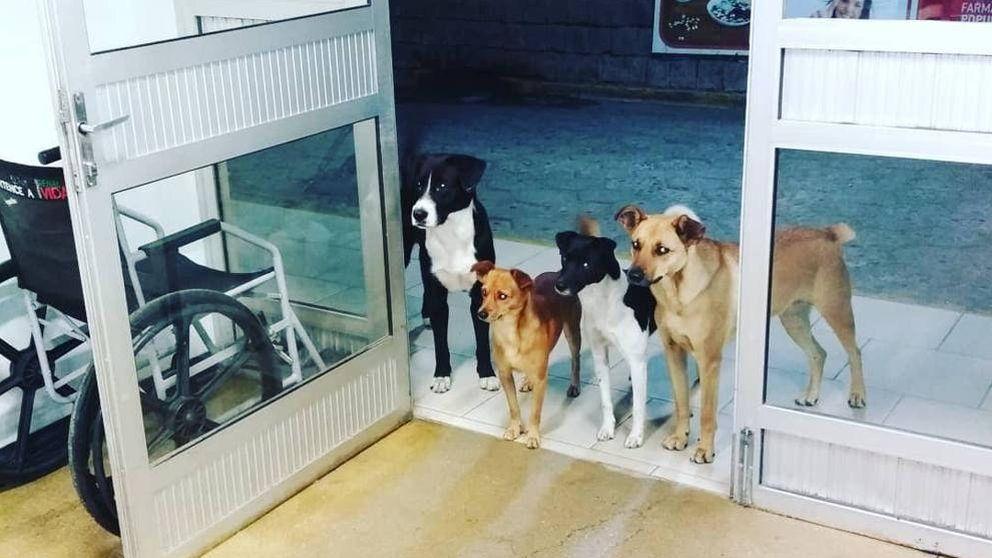 Cuatro perros esperan a su dueño, un hombre sin hogar, a la puerta del hospital